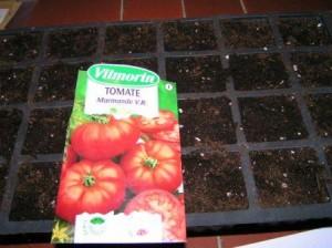 Graine tomate Vimorin
